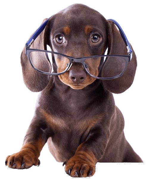 Mobile Dog Grooming In Twickenham Dogmasters Pet Grooming